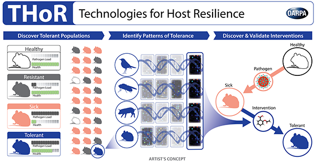 DARPA's new Technologies for Host Resilience (THoR) program aims to tackle the rising prevalence of multi-drug-resistant pathogens, as well as emerging biological threats. Instead of focusing on how to kill specific pathogens, THoR seeks to catalyze the development of breakthrough interventions that would increase a patient's ability to tolerate a broad range of pathogens. The program will explore the fundamental biology of host tolerance to infection with the goal of expanding treatment options for humans in the future.