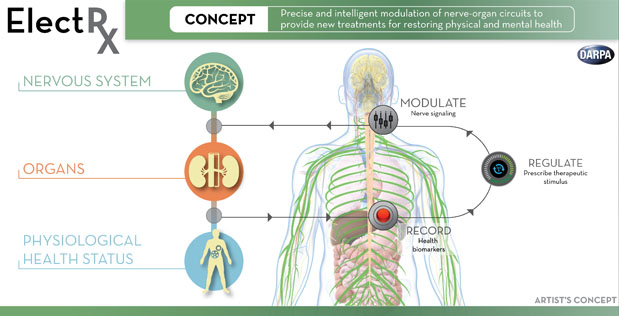 DARPA's ElectRx program plans to develop technologies to restore and maintain healthy physiological status through monitoring and targeted regulation of signaling in peripheral nerves that control organ functions. Novel therapies based on targeted stimulation of the peripheral nervous system could promote self-healing, reduce dependence on traditional drugs and provide new treatment options for illnesses.