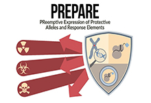 PReemptive Expression of Protective Alleles and Response Elements (PREPARE) Proposers Day