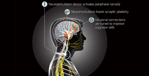 Image Caption: The primary goal of the Targeted Neuroplasticity Training (TNT) program is to understand the basic mechanisms linking neurostimulation to plasticity. Applying that knowledge, TNT technology will be designed to safely and precisely stimulate peripheral nerves to control synaptic plasticity at optimal points during cognitive skills training.