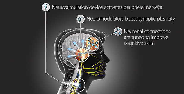 Image caption: TNT technology will be designed to safely and precisely modulate peripheral nerves to control synaptic plasticity during cognitive skill training.