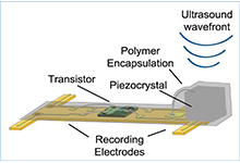 Image Caption: Each neural dust sensor consists of only three main parts: a pair of electrodes to measure nerve signals, a custom transistor to amplify the signal, and a piezoelectric crystal that serves the dual purpose of converting the mechanical power of externally generated ultrasound waves into electrical power and communicating the recorded nerve activity.